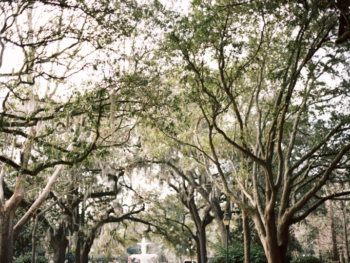 Contax 645, Savannah, Savannah on film, film is not dead, by Brita Photography, moss covered trees, romantic, destination travel photography 08